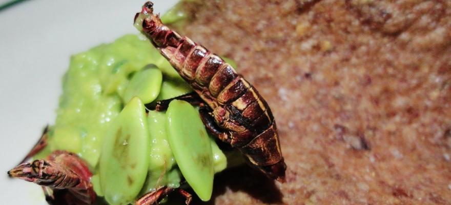 Taco Santo Cricket Chips