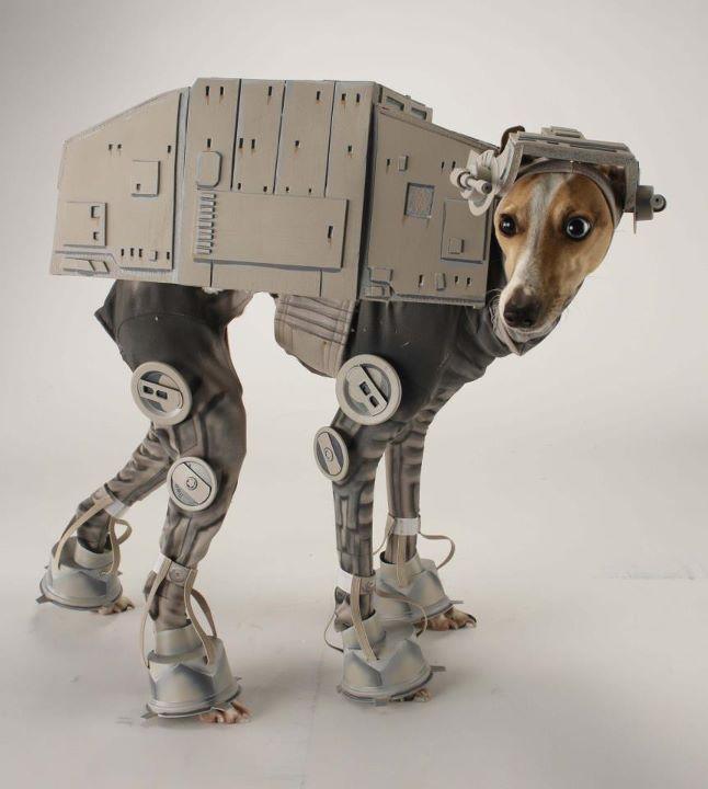 Atata Dog