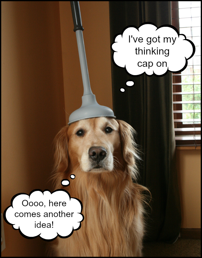 golden retriever wearing a plunger on her head