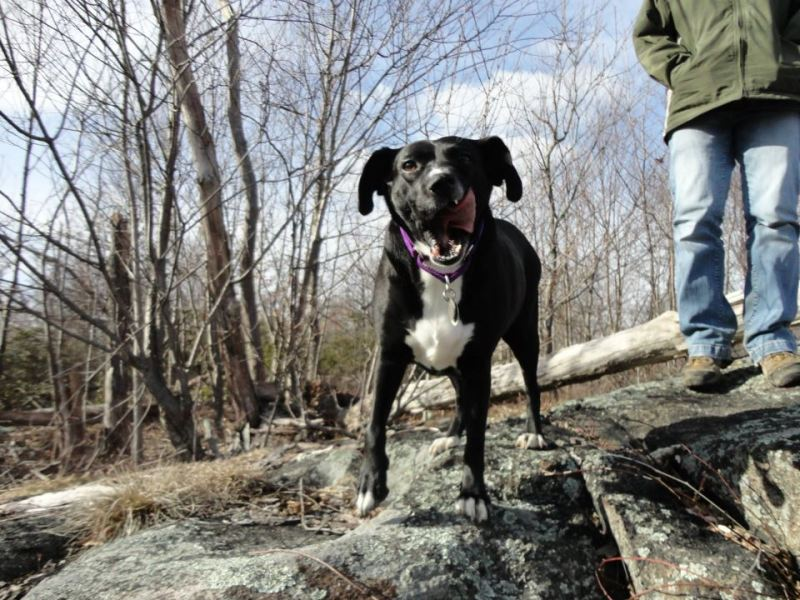 Lilly Hiking