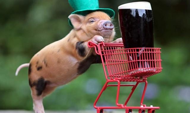 Pig Beer